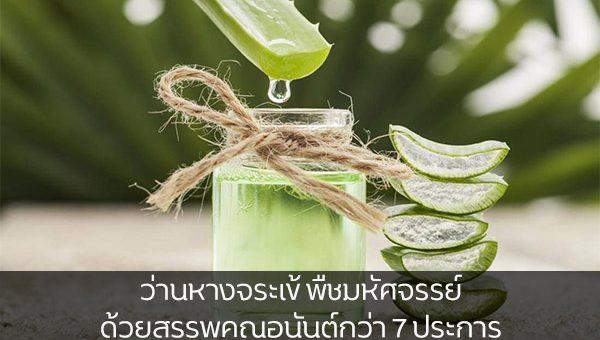 ว่านหางจระเข้ พืชมหัศจรรย์ ด้วยสรรพคุณอนันต์กว่า 7 ประการ ข่าวสาร ความรู้ สุขภาพ ครอบครัว กีฬา ออกกำลังกาย ว่านหางจระเข้