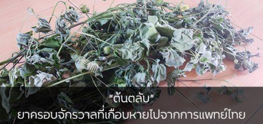"""""""ต้นตลับ"""" ยาครอบจักรวาลที่เกือบหายไปจากการแพทย์ไทย ข่าวสาร ความรู้ สุขภาพ ครอบครัว กีฬา ออกกำลังกาย ต้นตลับ"""